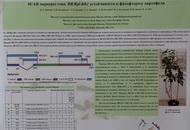 SCAR-маркеры  гена RB/RPI-BLB1 устойчивости к фитофторозу картофеля. Стендовый доклад