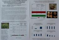 Устойчивость к фитопатогенам proSmAMP-1-трансгенных линий картофеля, полученных на основе сортов с различной восприимчивостью к  возбудителям фитофтороза и альтернариоза. Стендовый доклад