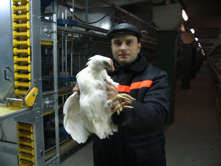 Заместитель директора по научной работе Опытной научной станции по птицеводству Киселев А.И. с курицей-несушкой