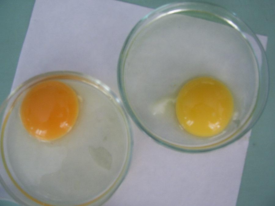 Интенсивность окраски желтка куриных яиц в зависимости от содержания в них каротиноидов. Исследования Опытной научной станции по птицеводству