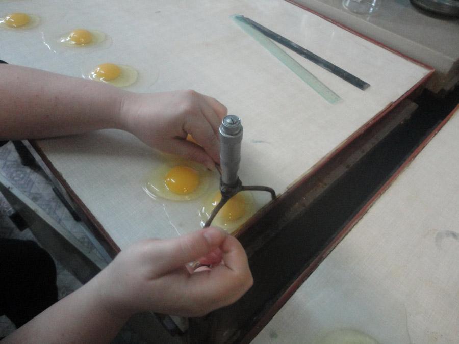 Изучение морфологических качеств яиц: определение высоты желтка. Исследования Опытной научной станции по птицеводству