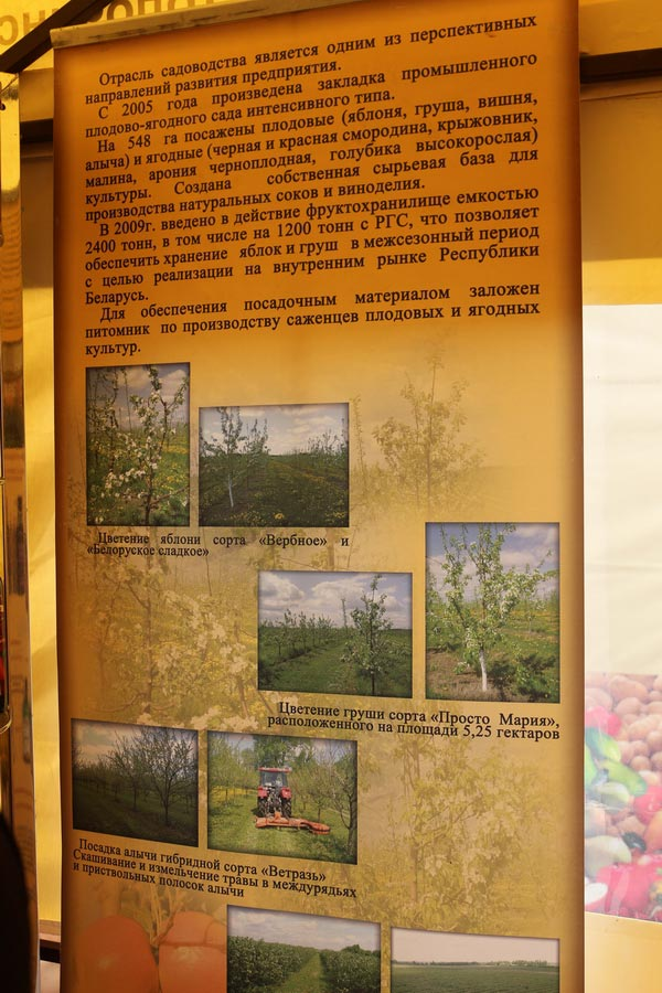 Толочинский консервный завод. Садоводство