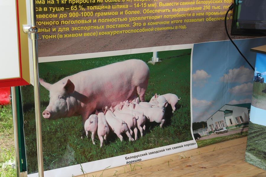 ЖодиноАгроПлемЭлита на БЕЛАГРО-2014, ОАО Гастелловское, 3-8 июня 2014 г.