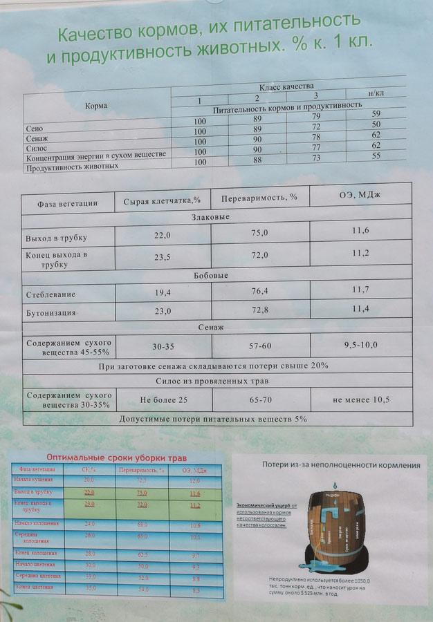 ЖодиноАгроПлемЭлита на БЕЛАГРО-2016. Качество кормов, их питательность и продуктивность животных