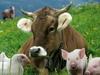 животноводческих комплексов