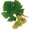 Производители вин и спиртных напитков