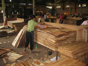 Global wood production grows for the fourth year