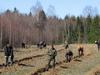 оценки эффективности лесохозяйственных мероприятий