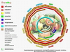 Диаграмма сезонного потребления плодов и ягод белорусского сортимента