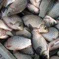 рыбохозяйственная деятельность