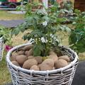 развитие картофелеводства, овощеводства и плодоводства